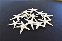 White Starfish Small