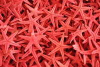 Red Starfish Small