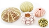 sea urchin pack 5-piece