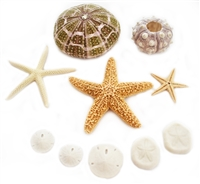 sea life sampler pack 10-piece
