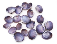 purple baby clam shells