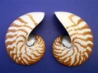 Center Cut Nautilus Shell