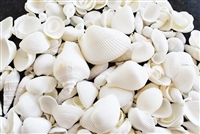 Medium White Shell Mix