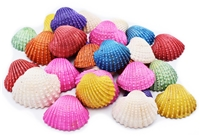 large dyed ark shells pastel