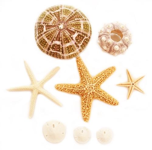 sea urchin decor.htm sea life decorator and crafts samplers  sea life decorator and crafts samplers