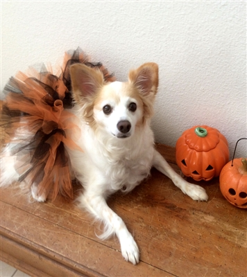 Halloween Handcrafted Dog Mesh Ribbon Tutu