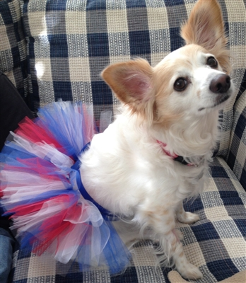 Patriotic Handcrafted Dog Mesh Ribbon Tutu