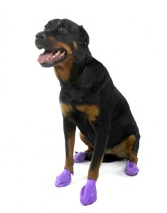 PawZ Dog Boots 12 pk-Large Purple