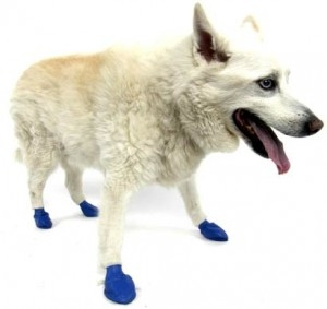 PawZ Dog Boots 12 pk-Medium Blue