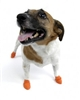 PawZ Dog Boots 12 pk-X-Small Orange