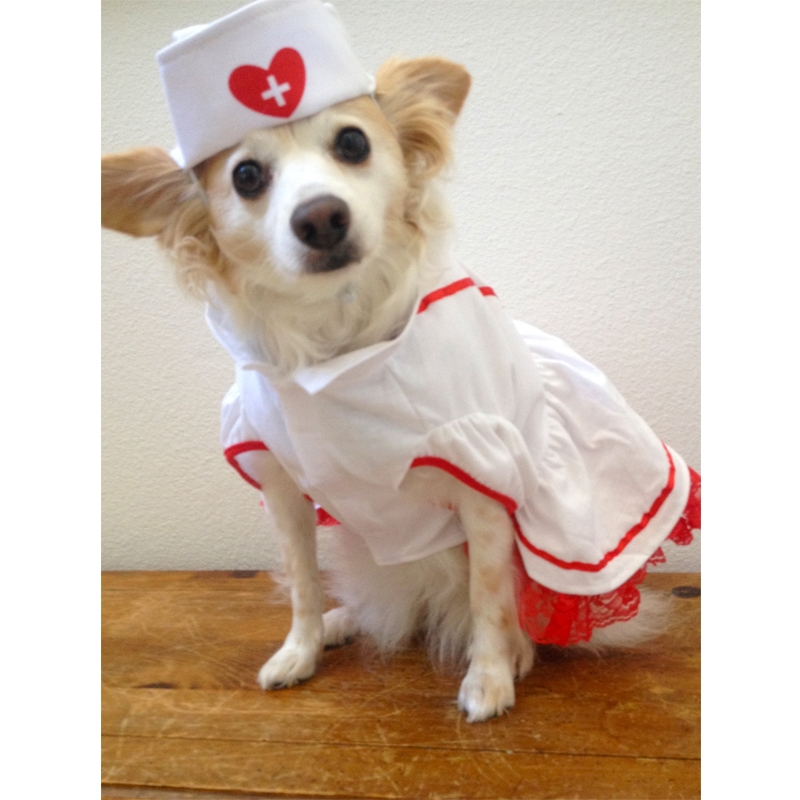dog nurse costume