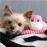 Zippy Paws Spencer the Crinkle Monkey Dog Toy