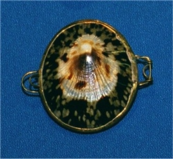 Limpet Polished Coin Purse