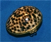 Tiger Cowry Poin Purse