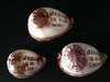 Assorted Religious Carved Tiger Cowry