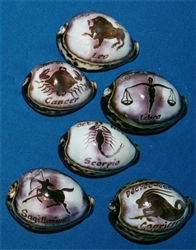 Carved Zodiac on Tiger Cowry