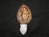 Palm Leaf Carved Tiger Cowry