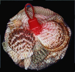 1/2 Kilo Net Bag of Shells