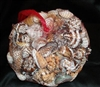 Large Gallon Net bag of World Mix Shells