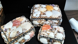 Shell Boxes, Set of 3