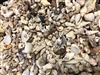 Philippine Shell Mix-Beach Wash