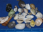 Philippine Small Shell Mix
