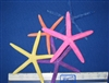 Dyed Assorted Color Starfish