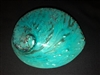 Midae Abalone Polished  Blue (Teal)