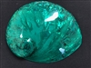 "Midae Abalone Polished 5.5"" Green"