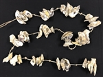 Oyster Shell Garland 72""