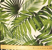 Palm and Fern Leaves