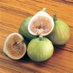 Fig - Italian Honey (White Tag)