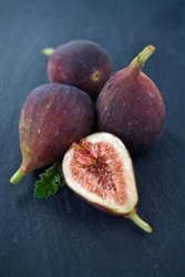 Fig - LSU Purple