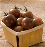 Certified Organic Tomato Plants Black Cherry
