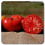 Certified Organic Tomato Plants Brandywine Red