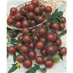 Certified Organic Tomato Plants Brown Berry