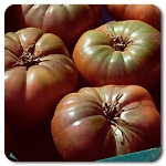 Certified Organic Tomato Plants Cherokee Purple