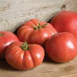 Certified Organic Tomato Plants German Johnson