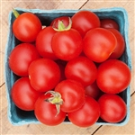 Certified Organic Tomato Plants Peacevine Red Cherry