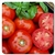 Certified Organic Tomato Plants Rutgers