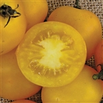 Certified Organic Tomato Plants Yellow Perfection