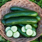 Cucumber Green Finger