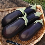 Traviata Italian Purple Eggplant