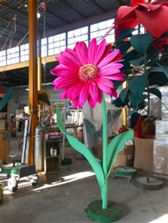 11' to 18' Giant Gerbera Daises