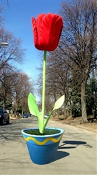 Giant 11' to 18 ' Tulips