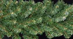 "Deluxe Rocky Mountain Pine 14"" Branched garland"