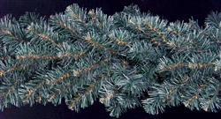 "Blue Spruce garland sold in 14"" and 25' lengths"
