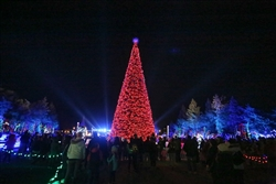 programmable Light Show Tree