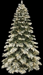 flocked mountain pine with warm white LED lights