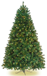 Colorado Spruce trees with mini lights sold in 3 sizes